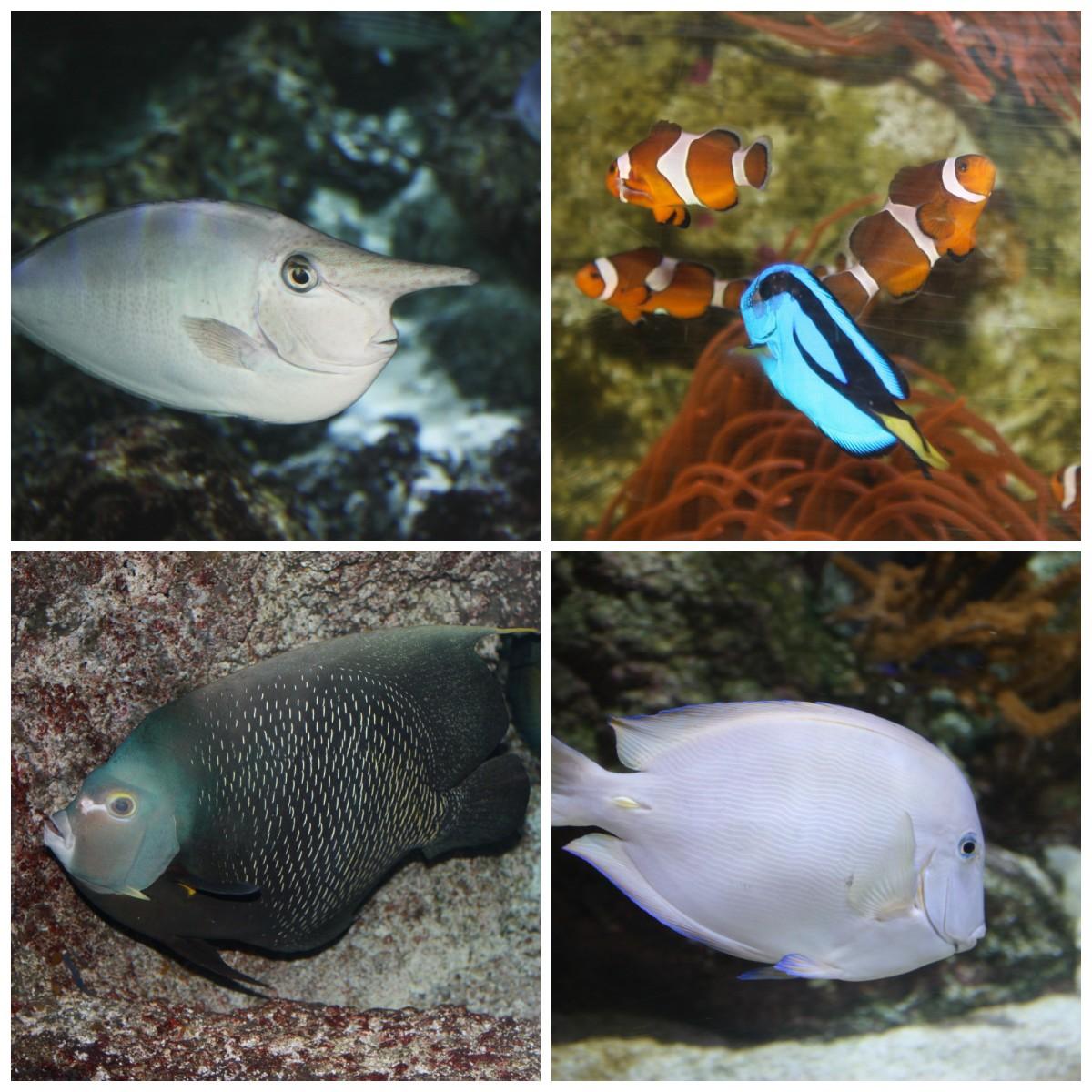 Fish at the Aquarium in La Rochelle
