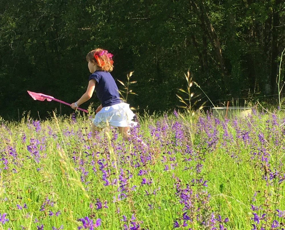 Butterfly hunting, country living in France