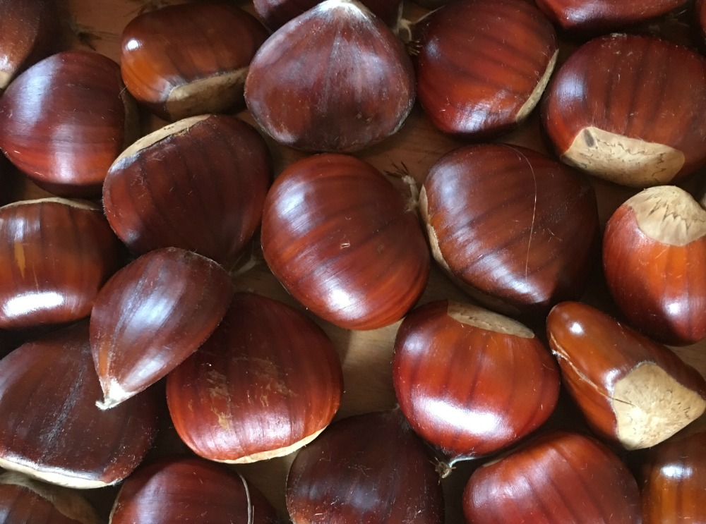 Chestnuts and country living in the Dordogne