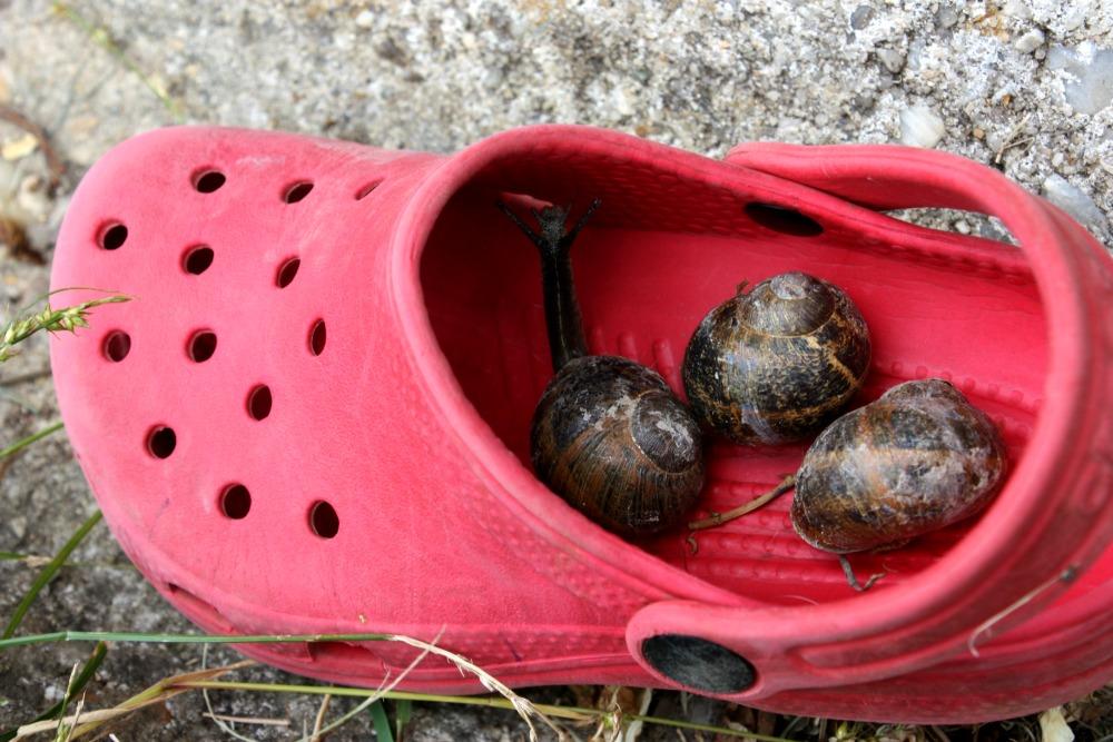 Crocs & snails, France