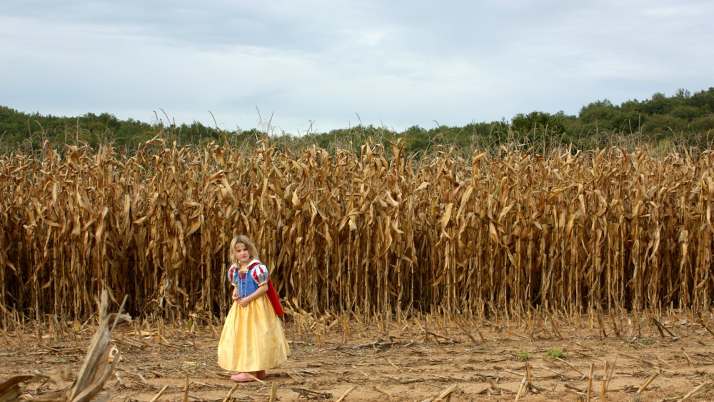 Snow white in a field of corn
