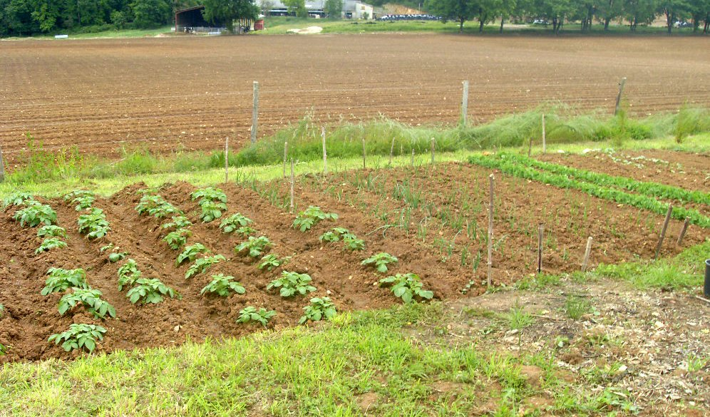 Vegetable patch, Dordogne, France